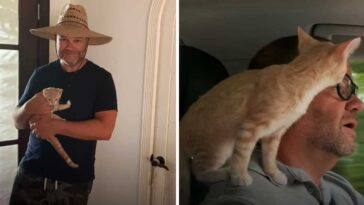Kitten becomes obsessed with his human