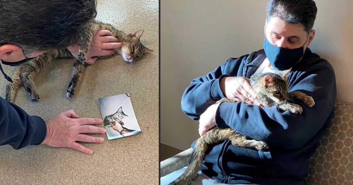 cat reunites with owner after 15 years