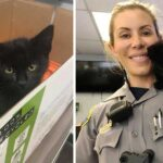 kitten wanders into police station and refuses to leave